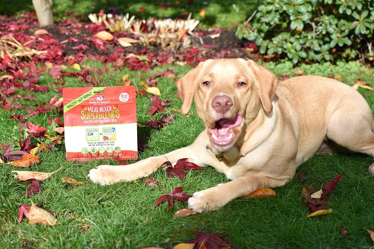Take Stella & Chewy's Meal Mixer Challenge with your pup! | oliveandivyblog.com